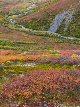 USA, Alaska, Brooks Range. Tundra and Dietrich River. by Jaynes Gallery