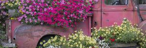 USA, Alaska, Chena Hot Springs. Panorama of old truck and flowers. by Jaynes Gallery
