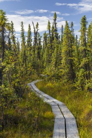USA, Alaska, Tetlin National Wildlife Refuge. Scenic of Hidden Lake Trail. by Jaynes Gallery