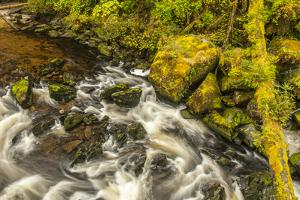 USA, Alaska, Tongass National Forest. Anan Creek scenic. by Jaynes Gallery