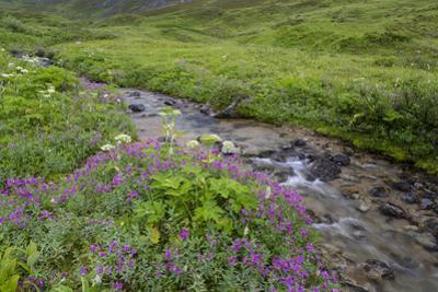 USA, Alaska. Upper Willow Creek and flowers. by Jaynes Gallery