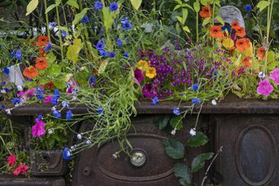 USA, Alaska, Wiseman. Flowers planted in vintage cook stove. by Jaynes Gallery