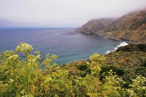 USA, California, Big Sur. Coastline landscape in summer. by Jaynes Gallery