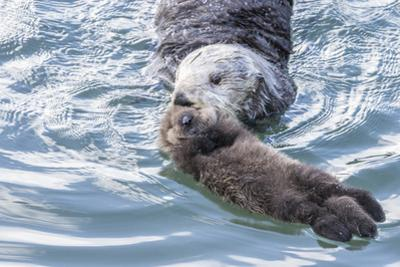 USA, California, San Luis Obispo. Sea otter mother and pup. by Jaynes Gallery