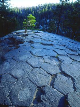 USA, California, Sierra Nevada. Rock Patterns, Devils Postpile Nm by Jaynes Gallery