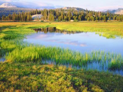 USA, California, Yosemite the Tuolumne River in Tuolumne Meadows by Jaynes Gallery