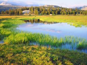 USA, California, Yosemite the Tuolumne River in Tuolumne Meadows by Jaynes Gallery