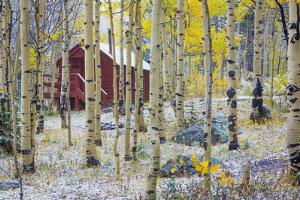 USA, Colorado, Grand Mesa. Solitary Cabin in a Forest by Jaynes Gallery