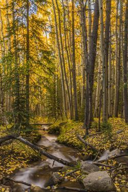 USA, Colorado, Rocky Mountain National Park. Waterfall in forest scenic. by Jaynes Gallery