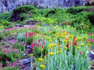 USA, Colorado, Wildflowers in Yankee Boy Basin in the Rocky Mountains by Jaynes Gallery