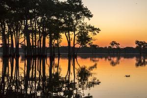 USA, Louisiana, Lake Martin. Sunrise on swamp. by Jaynes Gallery