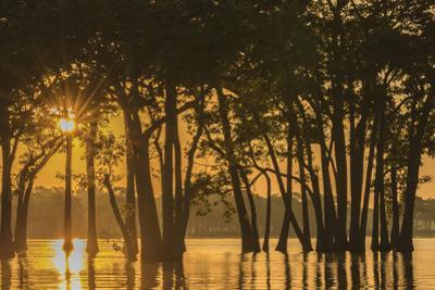 USA, Louisiana. Sunrise on Miller's Lake. by Jaynes Gallery