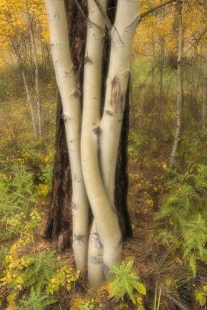 USA, Montana, Russell Gates Park. Tree montage. by Jaynes Gallery