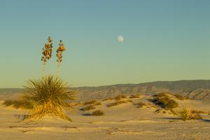 USA, New Mexico, White Sands National Monument. Moonrise over Desert by Jaynes Gallery