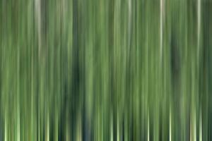 USA, North Carolina, Great Smoky Mountains. Forest blur. by Jaynes Gallery
