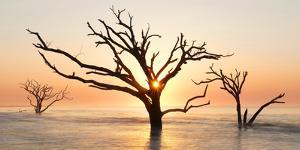 USA, North Carolina. Sunrise at Botany Bay Plantation by Jaynes Gallery