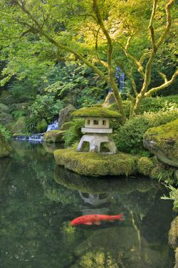 USA, Oregon, Portland. Koi pond in a garden. by Jaynes Gallery