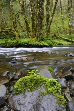 USA, Oregon, Tillamook State Forest. Scenic of Wilson River by Jaynes Gallery