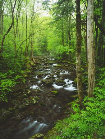 USA, Tennessee, a Moss Covered Stream in the Great Smoky Mountains by Jaynes Gallery