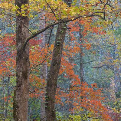 USA, Tennessee. Forest scenic in autumn. by Jaynes Gallery