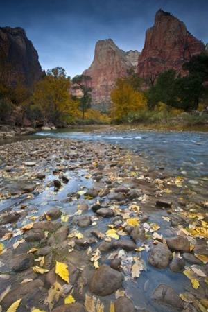 USA, Utah, Zion National Park. the Sentinel with Fallen Leaves in Virgin River by Jaynes Gallery