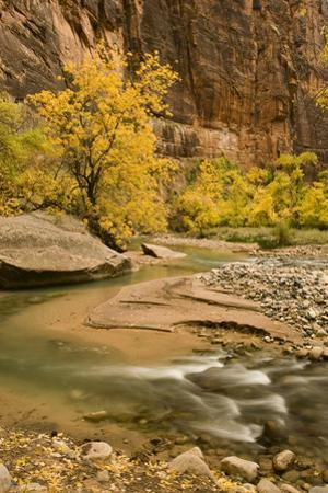 USA, Utah, Zion National Park. Virgin River Autumn Scenic by Jaynes Gallery