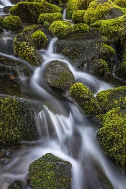 USA, WA, Olympic National Park. Cedar Creek scenic. by Jaynes Gallery