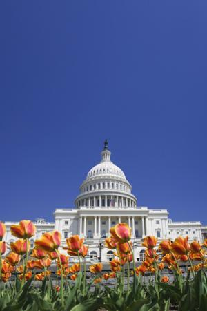 USA, Washington DC. Capitol building. by Jaynes Gallery