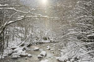 USA, Washington, Leavenworth. Sunlight illumines snow-covered trees lining Wenatchee River. by Jaynes Gallery
