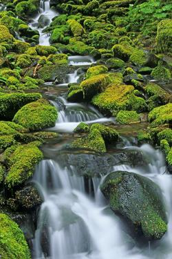 USA, Washington State, Olympic National Park. Creek cascade. by Jaynes Gallery