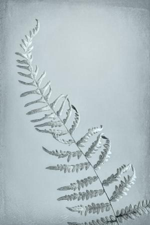 USA, Washington State, Seabeck. Bracken fern abstract. by Jaynes Gallery