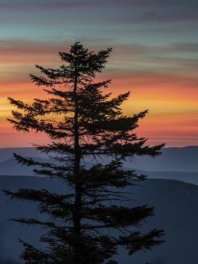 USA, West Virginia, Blackwater Falls State Park. Tree and landscape at sunset. by Jaynes Gallery