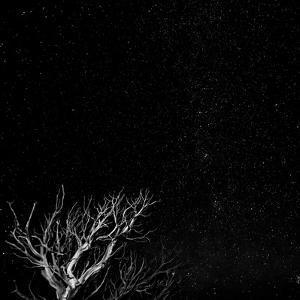 Utah, Capitol Reef National Park. Dead Tree and Night Sky by Jaynes Gallery