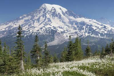 Washington, Mount Rainier National Park. Avalanche Lilies and Mount Rainier by Jaynes Gallery