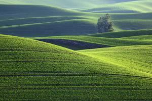 Washington, Steptoe Butte. Scenic of Rolling Green Palouse Hills by Jaynes Gallery