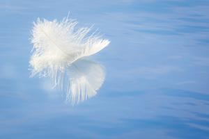 White Feather Reflects on Water, Seabeck, Washington, USA by Jaynes Gallery
