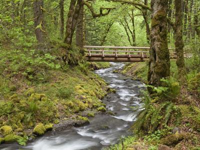 Wooden Bridge over Gorton Creek, Columbia River Gorge, Oregon, USA