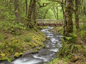 Wooden Bridge over Gorton Creek, Columbia River Gorge, Oregon, USA by Jaynes Gallery