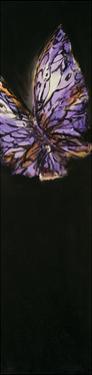 Purple Butterfly by JC Pino