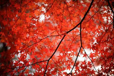 Fall Colors in Japan by jdphotography