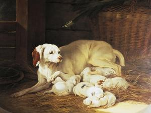 Bitch Nursing Puppies by Jean-Baptiste Oudry