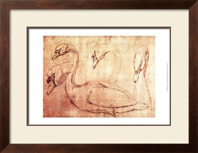 Sepia Swan Study
