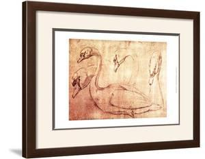 Sepia Swan Study by Jean-Baptiste Oudry