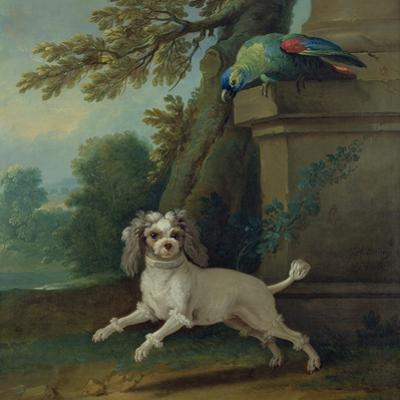 Zaza, the Dog, C.1730