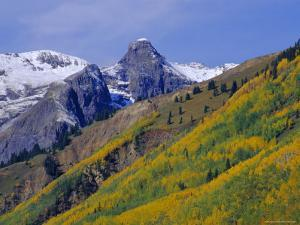 Aspen Pines and Snowy Peaks,San Juan Skyway, Colorado, USA by Jean Brooks