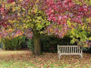 Bench under Liquidambar Tree, Hilliers Gardens, Ampfield, Hampshire, England, United Kingdom by Jean Brooks