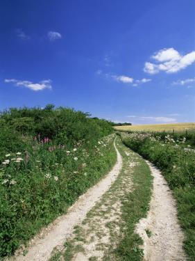 Curved Path Through Countryside, Old Winchester Hill, Hampshire, England, United Kingdom by Jean Brooks
