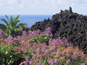 Roadside Flowers, La Palma, Canary Islands, Spain by Jean Brooks
