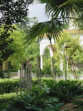 The Gardens from the Palace Wall, the Alcazar, Seville (Sevilla), Andalucia (Andalusia), Spain by Jean Brooks