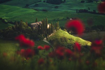 Tuscany - Spring Blossoms by Jean Claude Castor